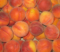 Fresh picked peaches.