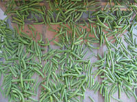 Drying fresh picked green beans.